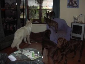 5 doggiesR