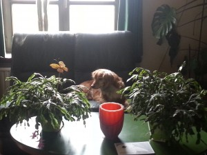 Bella (2)