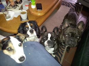 Vinny, Benji, Beau en Daisy